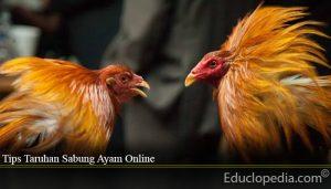 Tips Taruhan Sabung Ayam Online