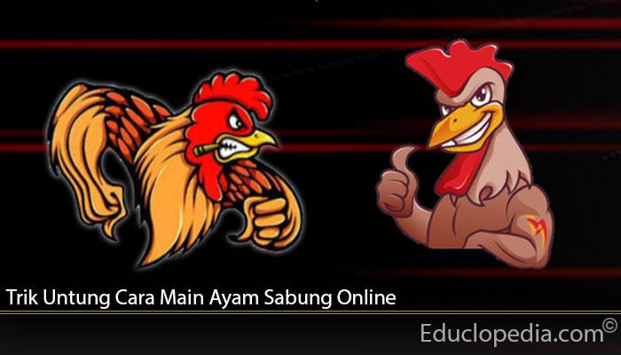 Trik Untung Cara Main Ayam Sabung Online