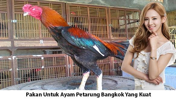 Pakan-Untuk-Ayam-Petarung-Bangkok-Yang-Kuat